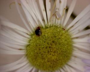 花6と虫1